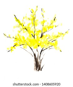 Forsythia Lush flowering shrub or flower in with spreading branches and yellow leaves. Hand-drawn watercolor sketch illustration.