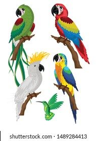 Four colorful parrots illustration in Photoshop for digital print.