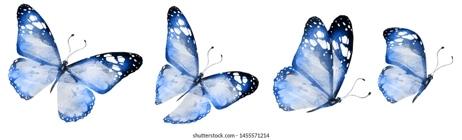 Four watercolor butterflies, isolated on white background