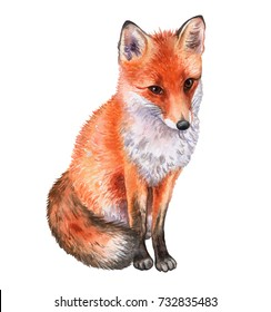 Fox isolated on white background. Watercolor. Illustration. Template. Picture. Handmade