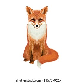 Fox - Realistic Vector Illustration - Animal symmetrical icon design – Vixen isolated on the white background