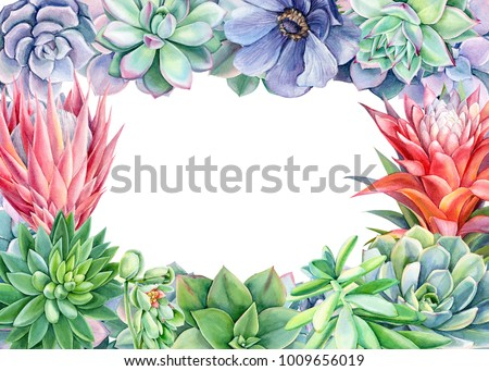 Frame Green Plants Flowers Succulents Echiveria Stock Illustration ...