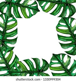 Frame with leaves of Monstera. Tropical leaves. Botanical watercolor. For design, invitations, cards