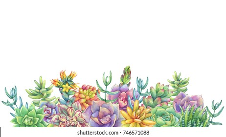 Frame with leaves, succulent, cactus. Succulents collection. Watercolor hand drawn painting illustration isolated on white background.