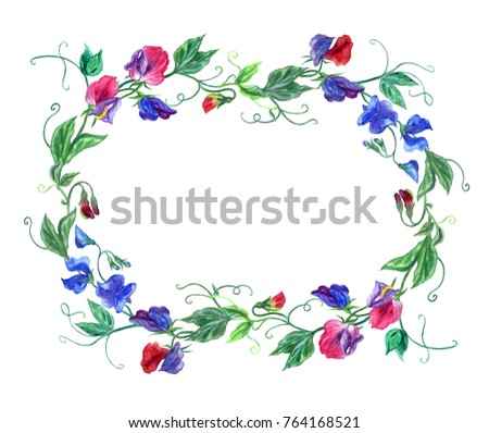 Frame Made Sweet Pea Watercolor Drawing Stock Illustration 764168521 ...