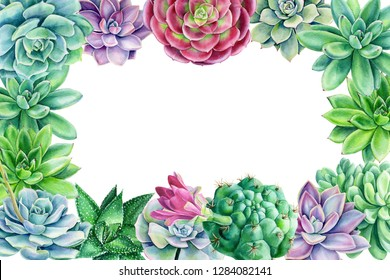 frame of multicolored succulents on an isolated white background, watercolor illustration, botanical painting