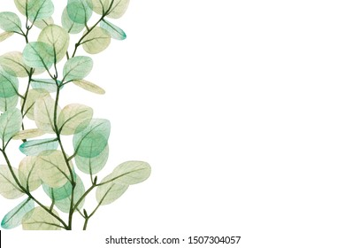 Frame of watercolor eucaliptus leaves. Floristic design elements for floristics. Hand drawn illustration. Greeting card. Floral print. Plant painted background. Watercolour painting. Template.