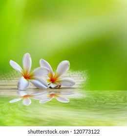 frangipani on light green background with reflection for adv or others purpose use