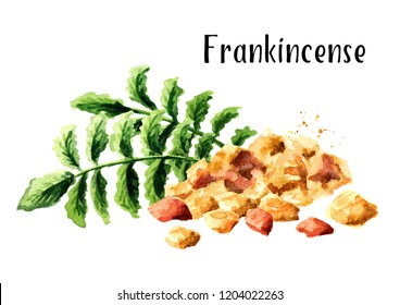 Frankincense dhoop and Boswellia carterii Frankincense tree leaves. Watercolor hand drawn illustration isolated on white background