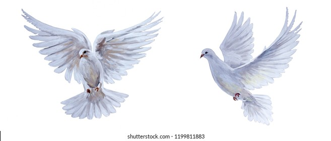 A free flying white dove on white background