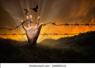 Freedom, human hands, which was released by barbed wire torn from the ground. There are birds flying freely, concept of freedom