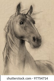 freehand horse head sepia toned pencil drawing