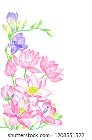 Freesia and lotus flowers in a beautiful composition isolated on white background watercolor pencils illustration. Fresh pink lotuses violet blue freesias branches with buds. Blossom flowers bouquet.
