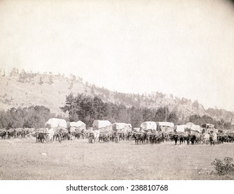 Freighting in the Black Hills. Several ox teams and wagons in a valley, Dakota Territory. photo by John C. Grabill, 1887