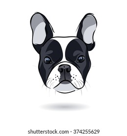 French bulldog head isolated on white background