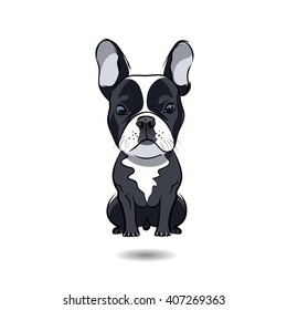 French bulldog isolated on white background
