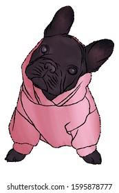 French Bulldog Puppy Wearing a Pink Sweater. Illustration of Dark Grey Frenchie Wearing a Small Pink Hoodie Sweatshirt.