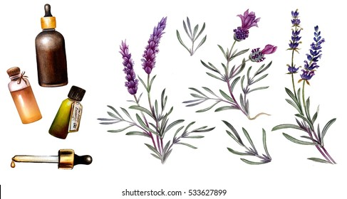 French lavender oil in watercolor. Essential oil illustration. Oil bottles and botanical illustration. Element for design of invitations, movie posters, fabrics and other objects. Isolated on white.