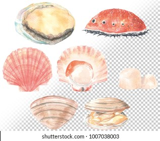 Fresh Abalone,Scallop and Surf clam set. Hand drawn illustration in water color style.easy die cut by clipping mask.