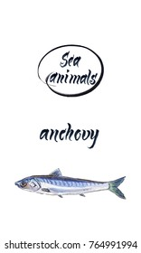 Fresh anchovy, marine atlantic ocean anchovy or sea anchovy fish species.  Watercolor, hand drawn - illustration