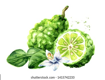 Fresh bergamot fruit with leaf and flower. Watercolor hand drawn illustration, isolated on white background