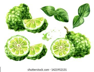 Fresh bergamot fruit set. Watercolor hand drawn illustration, isolated on white background