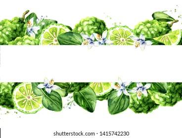 Fresh bergamot horizontal background. Watercolor hand drawn illustration isolated on white background