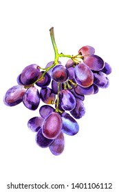 Fresh bunch of grapes purple icon on white background. Red  table grapes, wine grapes. Fresh fruit,  watercolor style
