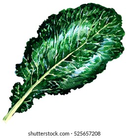 Fresh collard greens isolated, watercolor illustration on white