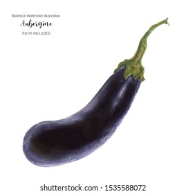 Fresh dark blue aubergine, watercolor illustration, isolated and clipping path