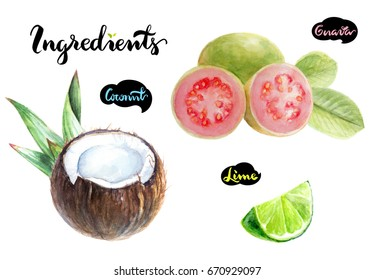 Fresh fruits kitchen watercolor set. Guava, lime, coconut watercolor hand draw illustration isolated on white background.