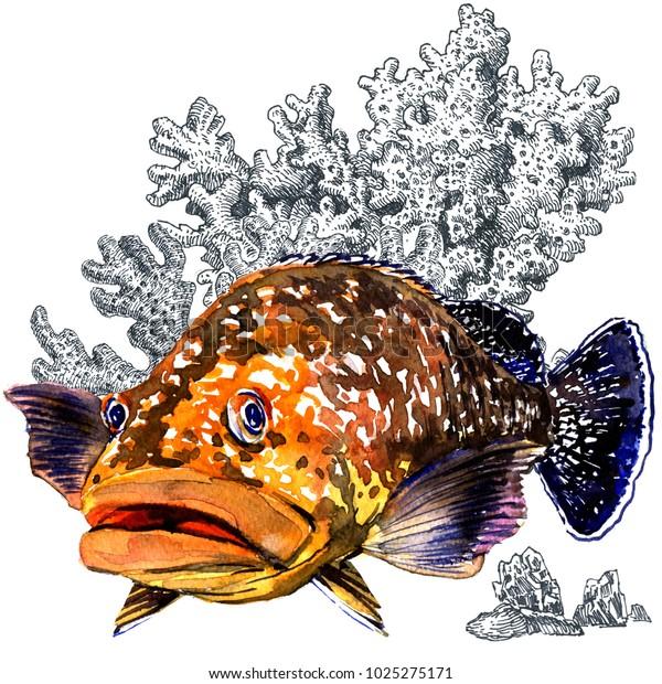 Ilustración De Stock Sobre Fresh Giant Grouper Sea Fish
