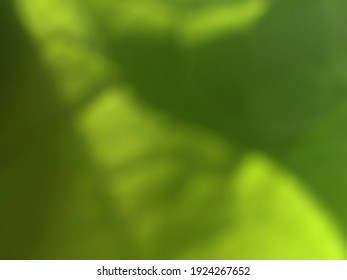 fresh green gradation for nature background themes with blur effect, leaf texture wallpaper, for illustration use or other concepts