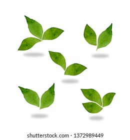 Fresh green mint leaves isolated on white background. Food ingredient