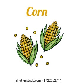 Fresh hand-drawn corn. Drawing healthy food. Marker illustrations. Can be used for printing on fabric, clothing, mugs, postcards and much more.