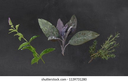 Fresh Herbs, Mint, Sage, Thyme Illustrated with Chalk on Blackboard