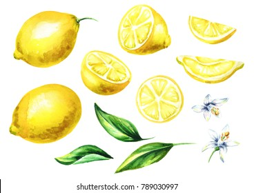 Fresh Lemon fruits and leaves with flowers collection. Watercolor hand drawn illustration