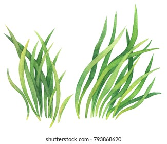 Fresh spring green grass. Watercolor hand drawn painting illustration isolated on a white background.
