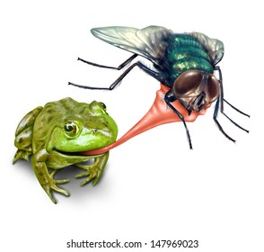 Frog catching bug with a sticky tongue shooting out as a nature concept of the natural cycle of life where a green amphibian eats a fly insect for survival on a white background.