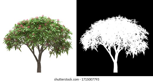 Front view (Plumeria Rubra) png with alpha cutout 3D rendering