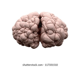 A front view of a typical brain on an isolated background
