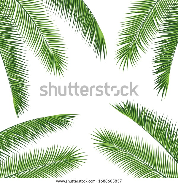 Fropical palm leaves frame botanical  illustration. Exotic nature card or banner with frame for text isolated on white background. Jungle green leaf floral pattern. Tropical palm leaves card.
