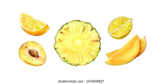 fruits half slice set yellow ananas orange lemon mango plum realistic botanical watercolor illustration juicy isolated on white hand drawn, tropical food exotic food for label design