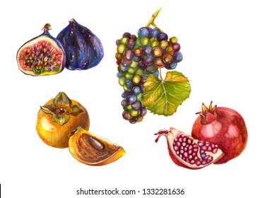 Fruits isolated on white background. Hand-drawn art illustration. Persimmon, pomegranate, figs, bunch of grapes. Natural juicy vitamin diet organic vegetarian fresh dessert exotic