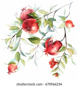 Fruits pomegranate on a branch with blossom flowers. Hand drawn watercolor on white background .