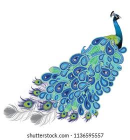 Full preening peacock