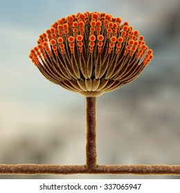 Fungi Aspergillus, black mold, which produce aflatoxins and cause pulmonary infection aspergillosis, 3D illustration