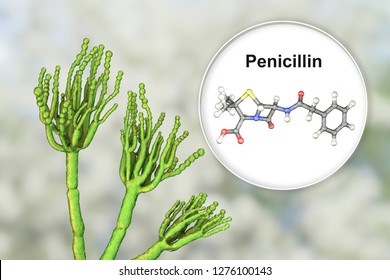 Fungi Penicillium producing penicillin antibiotic, 3D illustration