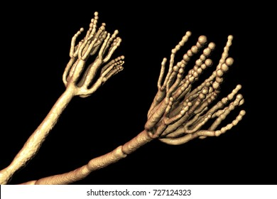 Fungi Penicillium which cause food spoilage and are used for production of the first antibiotic penicillin. 3D illustration spores (conidia) and conidiophore