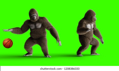 Funny 3d brown gorilla play to basketball. Super realistic fur and hair. Green screen. 3d rendering.